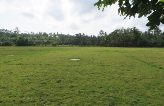 Mixed plantation for sale with paddy views
