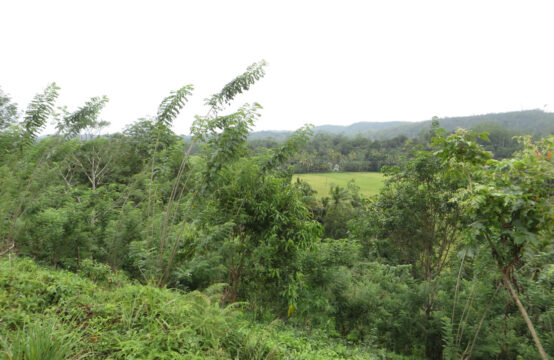Development land for sale with paddy field view