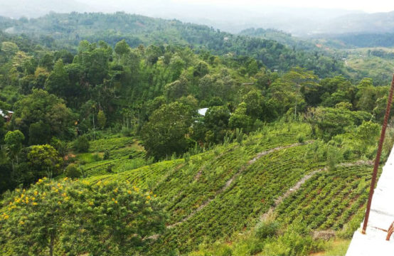 Development land for sale close to Kandy