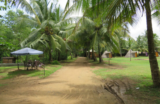 Beautiful mangrove property for sale