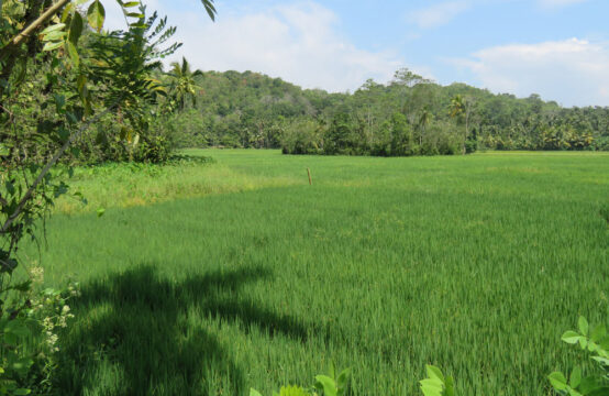 Development land for sale overlooking paddy field
