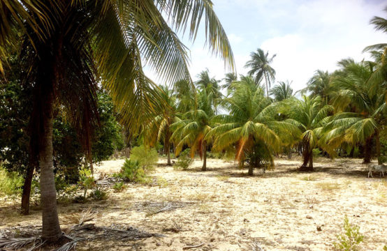 1 Acre coconut land for sale at Kudawa