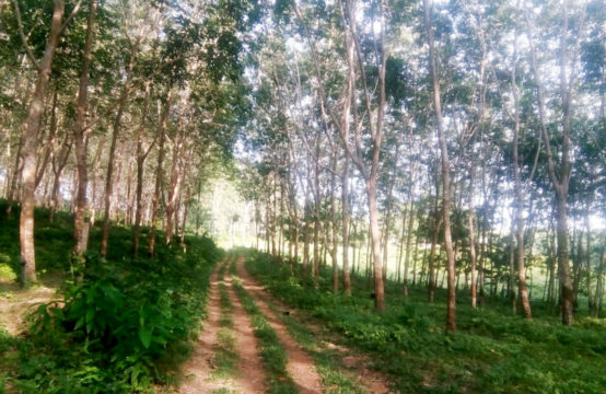 30 Acre elevated mixed plantation for development