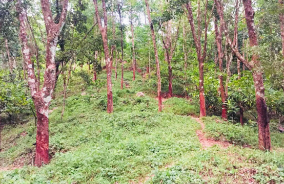 Rubber and Cocoa plantation (12 Acres) for sale