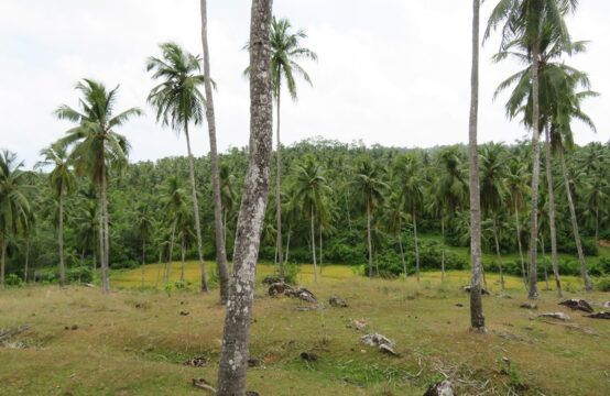 Land for sale 5 Acres
