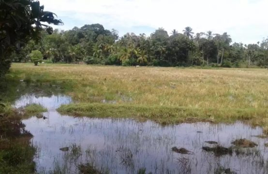 Land with paddy field view for sale