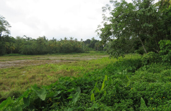 Land for sale in a village location – 2 Acres