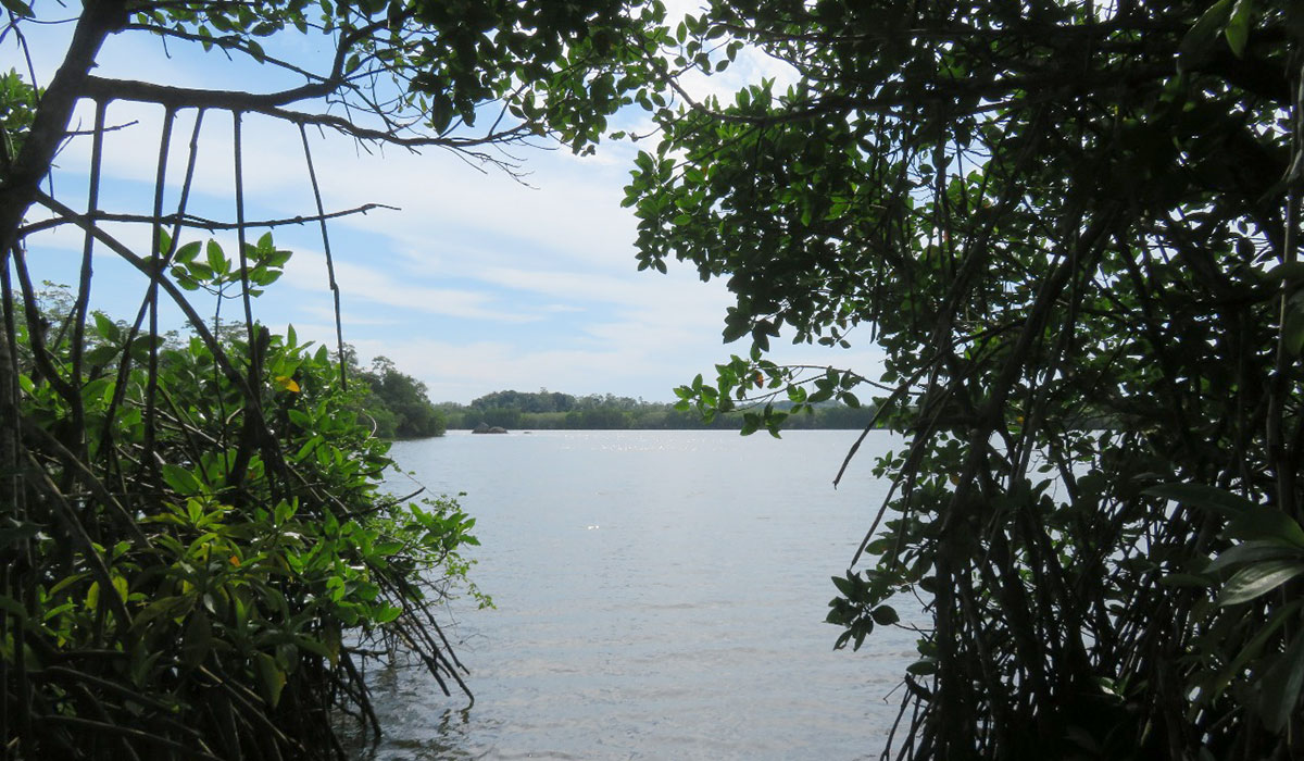 Development land for sale on Koggala lake