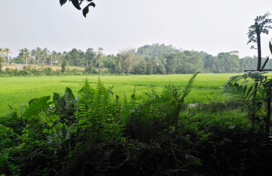 Land for sale with Rubber and Coconut &#8211&#x3B; 2.4 Acre