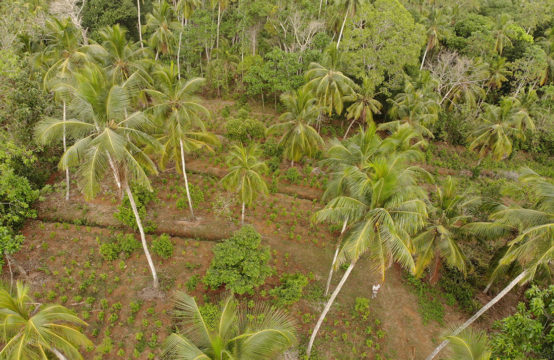 Mixed plantation for sale close to Matara town &#8211&#x3B; 2 Acres