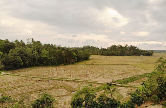 Land for development with paddy field view – 3 Acres