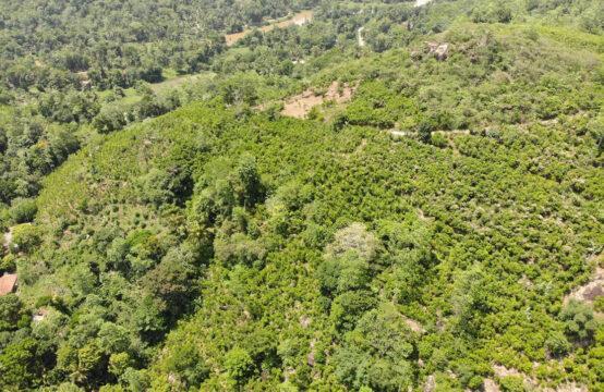 Cinnamon plantation for sale 38 Acres