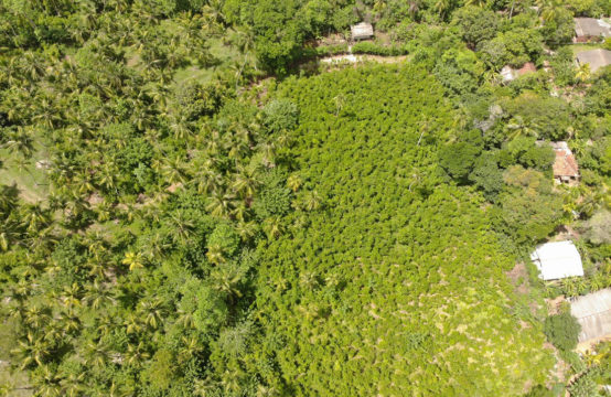 Land for sale close to Akurala beach &#8211&#x3B; 3 Acres