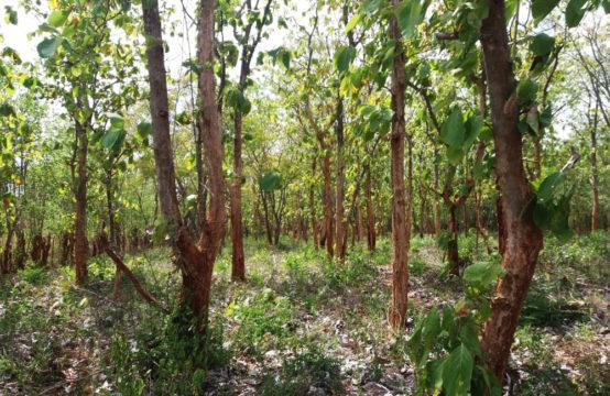 Development land for sale on Tissa road