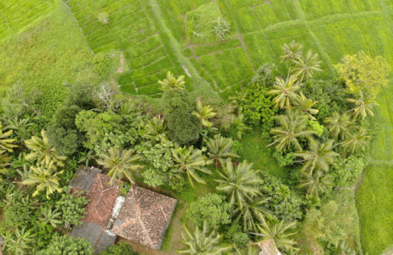 Beautiful land for sale overlooking paddy field