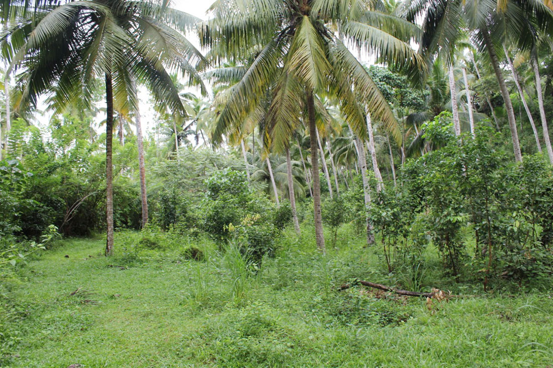 Land for sale in Udagangoda – 3 Acres