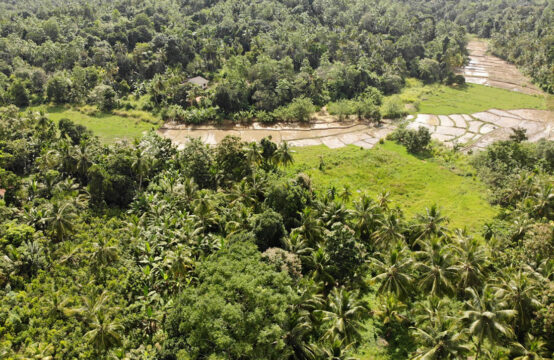 Cinnamon land for sale 4.5 Acre