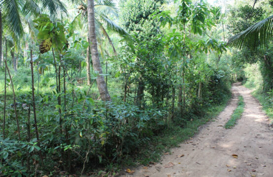 5 Acre Coconut plantation for sale in Beliatta