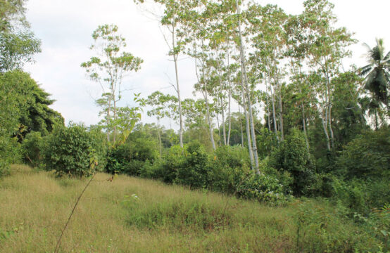 Land for sale 1 Acre