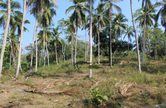 Development land for sale close Amanwella Beach 4 Acre