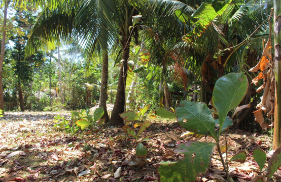 Small plot of land for sale in Kottagoda