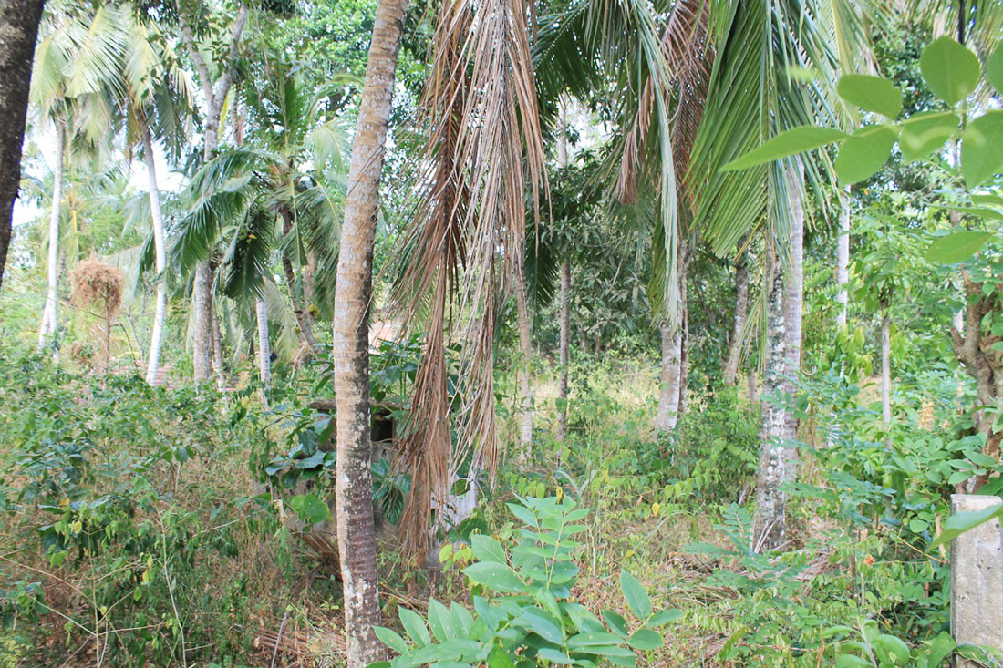 Land for development in Hiriketiya