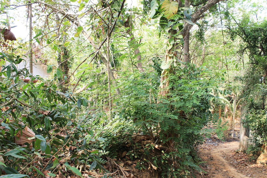 Land for sale close to the beach