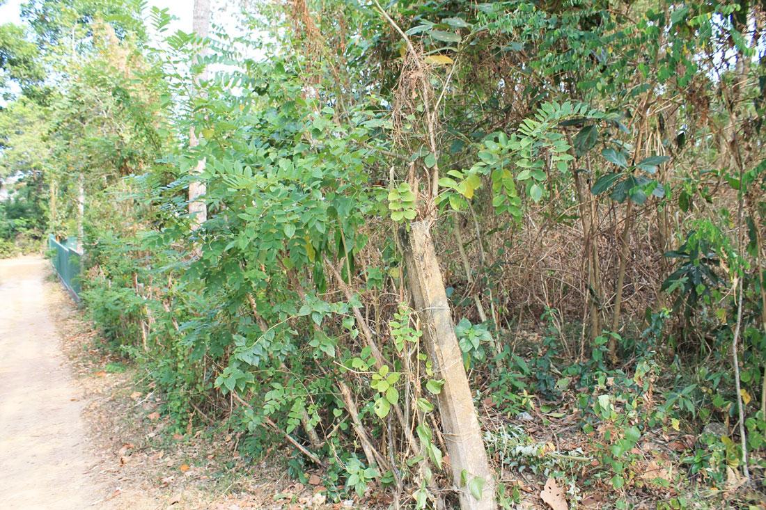 Building plot for sale in a pleasant village