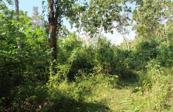 Land for sale 3 Acres