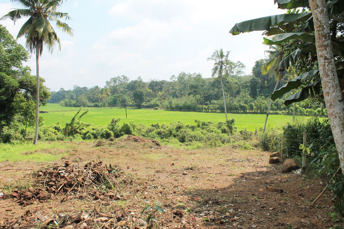 Development land with paddy field view for sale