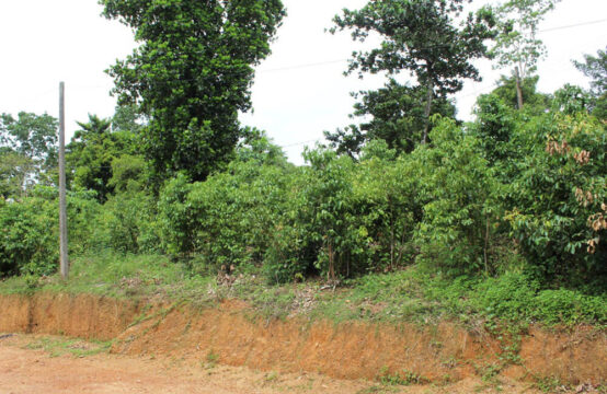 Small Cinnamon plantation for sale