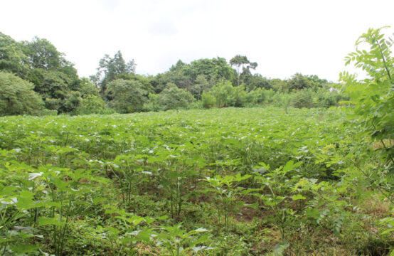 Land for sale 14 acres