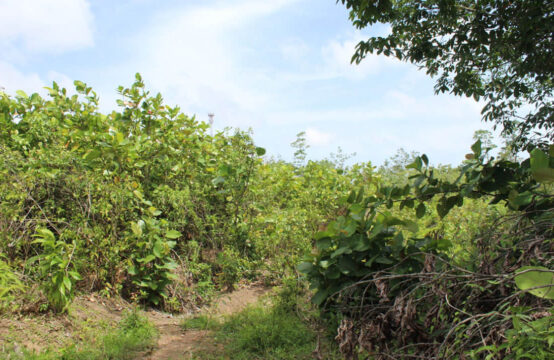 Land for sale 9 Acres
