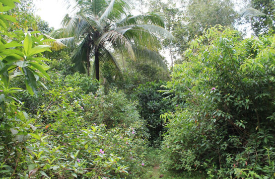 Land for sale 1.6 Acres