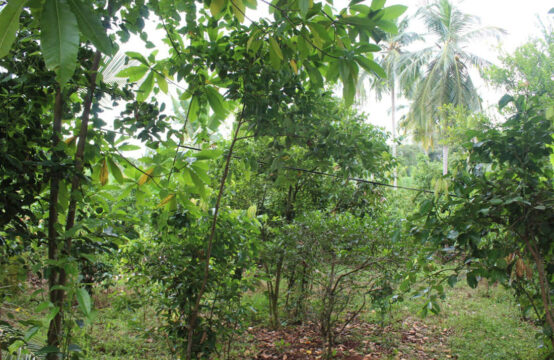 Land for sale 1.5 Acres
