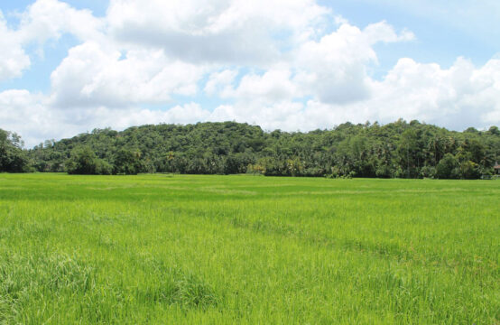 Land for sale 22 Acres